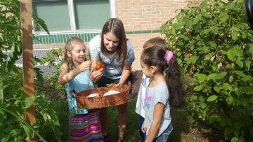 pic-Pine-Richland garden project