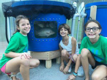 McGuffey SD starts aquaponics program