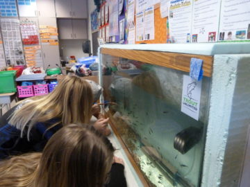 Fourth-grade class participates in Trout in the Classroom project