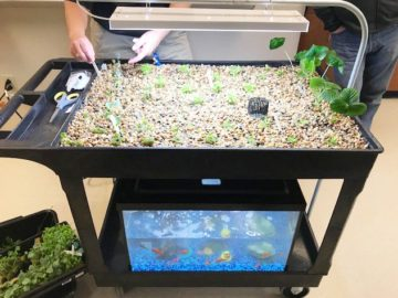 Camp Hill Students Grow & Harvest Plants from Mobile Aquaponics Carts