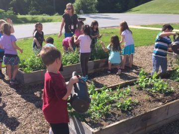 Green Thumb Club gives garden-to-table experience