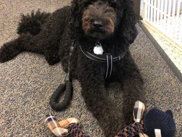 Therapy dog provides support to Shaler Area High School students